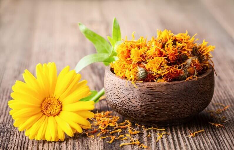 Kalendula (Kadife Çiçeği) Cilt Bakımında Ne İşe Yarar?